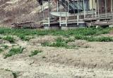 Pedernales-River-February-2013-8