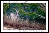 crystal-falls-leander-tx-hill-country-800-45