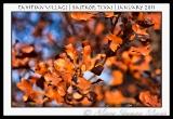tahitian-village-bastrop-tx-2011-20-2