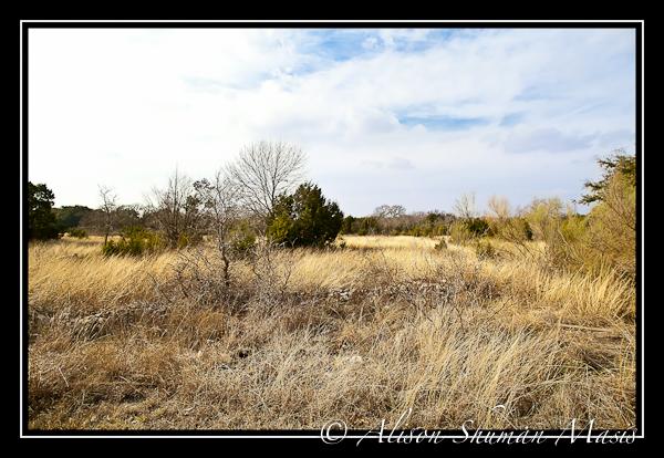 A grassy field in Behrens Ranch