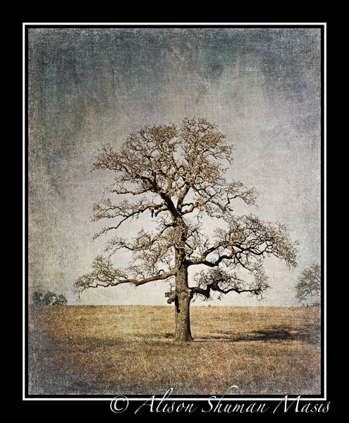 Vanishing-Texas-Tree-in-Field-Art-Painting