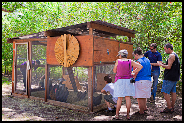 Medium Sized Chicken Coop in Austin