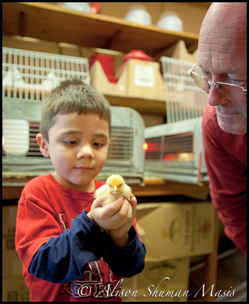 Child holding a baby chick at Buck Moore Feed and Supply in Austin Texas